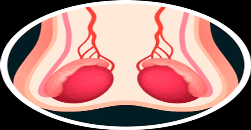Imagen Los testículos y la testosterona.