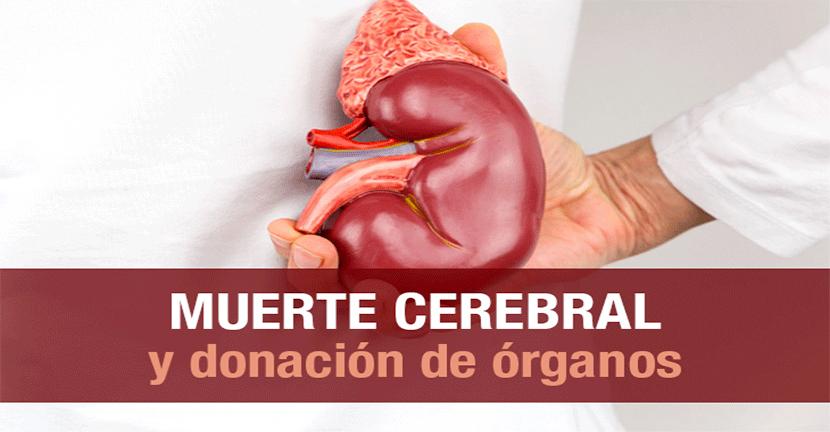 Imagen Muerte cerebral y donación de órganos