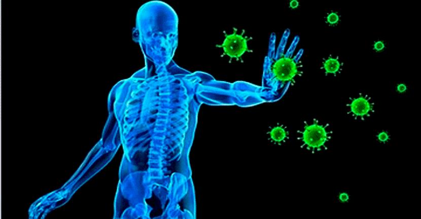 Imagen Fortalecer el sistema inmune, la clave para prevenir enfermedades por virus y bacterias.
