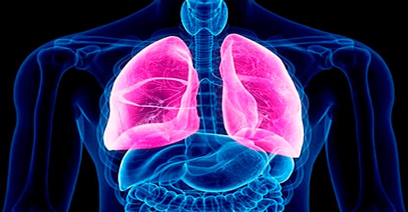 Imagen Fibrosis quística, atención multidisciplinaria