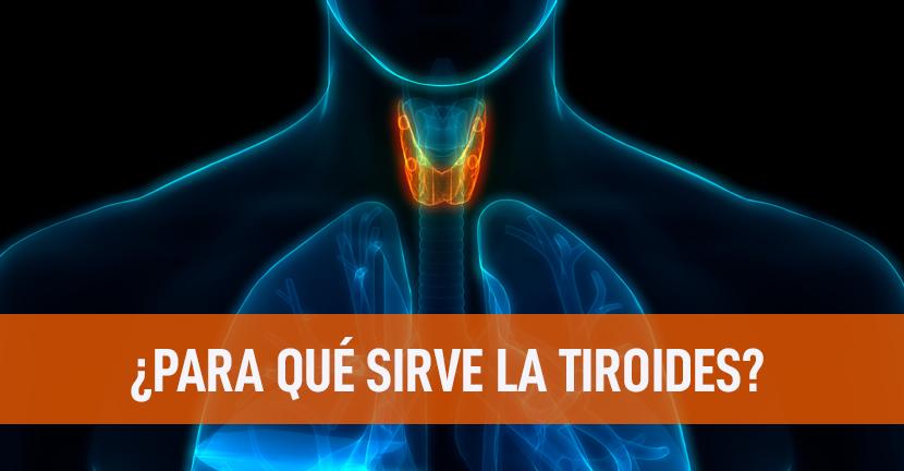 Imagen ¿Para qué sirve la tiroides?