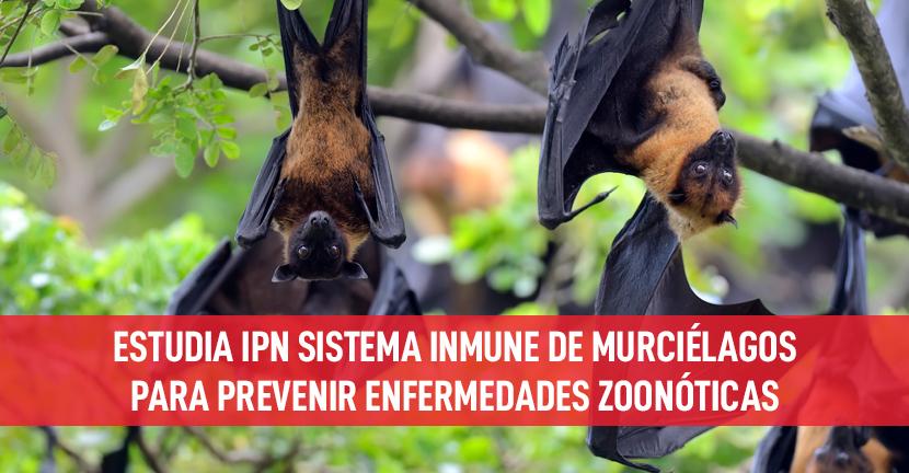 Imagen Estudia IPN sistema inmune de murciélagos para prevenir enfermedades zoonóticas