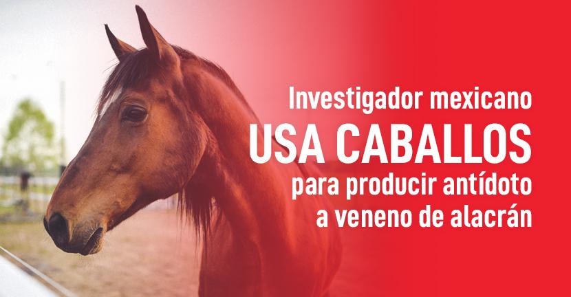 Imagen Investigador mexicano usa caballos para producir antídoto a veneno de alacrán
