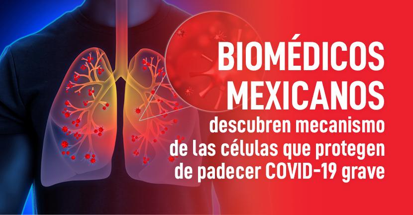 Imagen Biomédicos mexicanos descubren mecanismo de las células que protegen de padecer COVID-19 grave