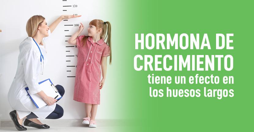 Imagen Hormona de crecimiento tiene un efecto en los huesos largos