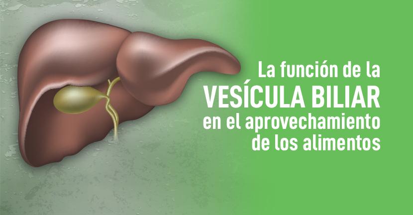 Imagen La función de la vesícula biliar en el aprovechamiento de los alimentos